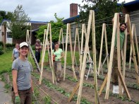 Work party to build pole bean trellises, July 2012