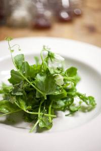 peashoots_plated