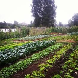 Marra Farm, Fall 2015